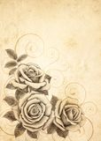 Freehand drawing rose 03 Royalty Free Stock Images