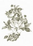 Freehand drawing rose. Stock Photos