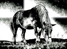 Freehand horse head art design illustration abstract drawing. Ffreehand horse head art design design illustration good for any design. A very funny illustration Stock Photography