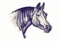 Freehand horse head pencil drawing Stock Photo