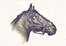 Freehand horse head pencil drawing Stock Photography