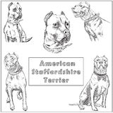 Freehand sketch illustration of American Pit Bull Terrier, Stock Photography