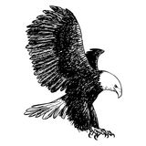 Freehand sketch illustration of eagle, hawk bird. Doodle hand drawn Stock Photo
