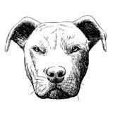 Freehand sketch illustration of pitbull dog Stock Photo