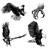 Set of eagle doodle hand drawn Stock Photo