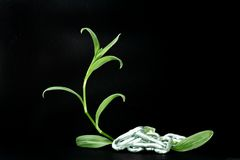 Freeing nature. A plant depicting the struggle between man an nature Stock Images