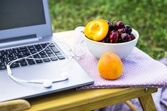 Freelance outdoor summer work concept. Work on a laptop on a picnic in nature - next to a bowl of cherries and apricots. Freelancer work concept Royalty Free Stock Photos