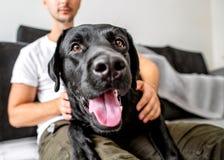 Freelancer facet siedzi w domu pracować z psem w uścisku, fotografia stock
