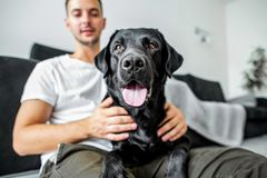 Freelancer guy sitting at home working in laptop and with dog in. Arms, black labrador royalty free stock images