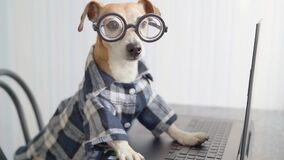 Freelancer hungry dog typing on laptop keyboard.