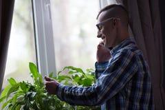 Freelancer mężczyzna pracuje w domu stać nadokiennym opowiada pn telefonem Zdjęcia Royalty Free