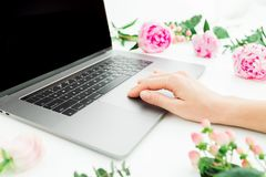 Freelancer woman working on laptop. Hand with laptop and pink flowers and eucalyptus branches on white background. Flat lay. Top. Freelancer woman working on stock image