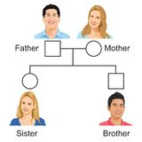 Biology - family tree versiyon 01 royalty free illustration