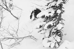 freeride Σιβηρία Στοκ φωτογραφία με δικαίωμα ελεύθερης χρήσης