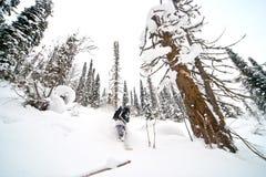 Freeride em Sibéria Imagem de Stock Royalty Free