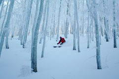 Freeride ski in the woods of Corno alle Scale resort. Royalty Free Stock Photography