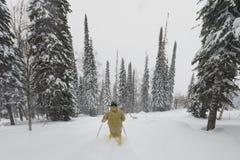 Freeride skidåkare i skogen Royaltyfri Bild