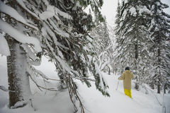 Freeride skier in the forest. Freeride skier with rucksack running downhill in freeze motion of snow powder Stock Images