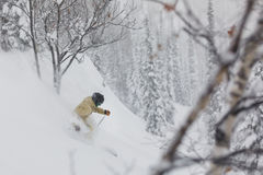 Freeride skier in the forest. Freeride skier with rucksack running downhill in freeze motion of snow powder Stock Photos
