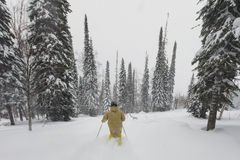 Freeride skier in the forest Royalty Free Stock Image