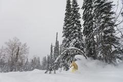Freeride skier in the forest Royalty Free Stock Images