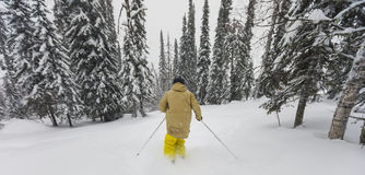 Freeride skier in the forest. Freeride skier with rucksack running downhill in freeze motion of snow powder Royalty Free Stock Photos