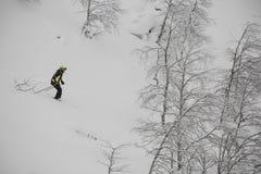 Freeride skier in wild forest Stock Photos