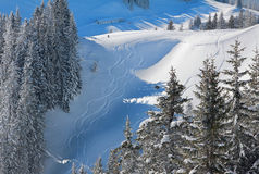 Freeride tracks in powder snow, bavarian alps Royalty Free Stock Photo
