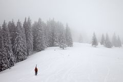 Freerider go up on snow off-piste slope in frozen fir forest wit. Freerider with skis on backpack go up on snow off-piste slope in frozen fir forest with fog sky stock images