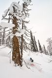 Freerider skiing in Siberia Stock Image