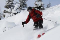Freeriding between fir trees. Male freerider is skiing downhill between fir trees Stock Image