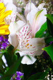 Freesia. As a part of a bouquet Stock Image