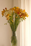 Freesia Stock Image