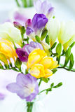 Freesia. Bunch of colorful freesia flowers Stock Photo
