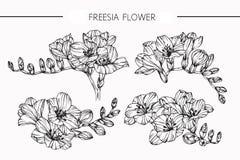 Freesia blommar teckningen och skissar med linje-konst Arkivbild