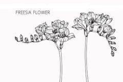 Freesia blommar teckningen och skissar med linje-konst Arkivfoto