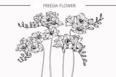 Freesia blommar teckningen och skissar med linje-konst Royaltyfri Bild