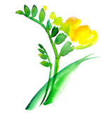 Freesia branch Royalty Free Stock Photography