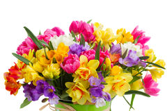 Freesia and daffodil  flowers. Blue, pink  and yellow freesia and daffodil  flowers  close up  isolated on white background Royalty Free Stock Image