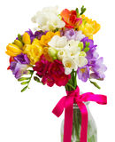 Freesia and daffodil  flowers. Blue, pink  and yellow freesia   flowers  close up  isolated on white background Royalty Free Stock Images