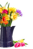 Freesia and daffodil  flowers in blue pot close up. Multicolored  freesia and daffodil  flowers  in blue pot close up  isolated on white background Stock Photography