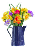 Freesia and daffodil  flowers in blue pot. Multicolored  freesia and daffodil  flowers  in blue pot  isolated on white background Stock Photos