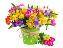 Freesia and daffodil  flowers in blue pot. Multicolored  freesia and daffodil  flowers  in blue pot  isolated on white background Stock Image