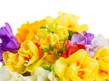 Freesia and daffodil  flowers. Blue and yellow freesia and daffodil  flowers  border  isolated on white background Royalty Free Stock Image