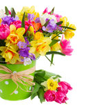 Freesia and daffodil  flowers. Blue and yellow freesia and daffodil  flowers  close up in green  pot  isolated on white background Stock Image