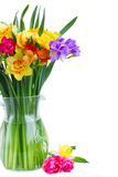 Freesia and daffodil  flowers. Blue and yellow freesia and daffodil  flowers  in glass vase close up isolated on white background Stock Photos