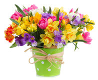 Freesia and daffodil  flowers. Blue and yellow freesia and daffodil  flowers  in green  pot  isolated on white background Stock Images