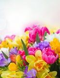 Freesia and daffodil  flowers  border. Multicolored  freesia and daffodil  flowers on blue bokeh background Stock Photo