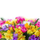 Freesia and daffodil  flowers  border Stock Images