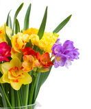 Freesia and daffodil  flowers close up Stock Images